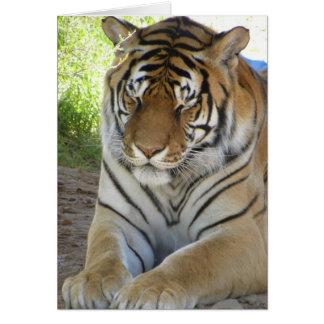Carte de tigre de sommeil (v)