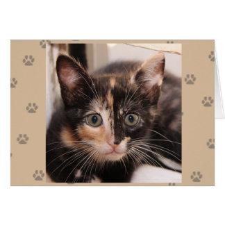 Carte de Tortie de délivrance de chat de Greyfoot