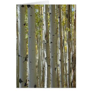Carte de troncs d'Aspen