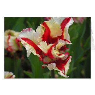 Carte de tulipe de perroquet (blanc)