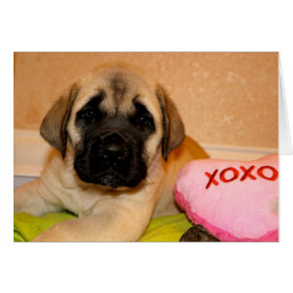 Carte de valentine de chiot de mastiff