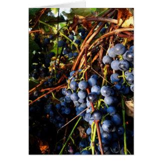 Carte de vignes de raisin Concorde