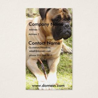 Carte de visite anglais de chien de mastiff