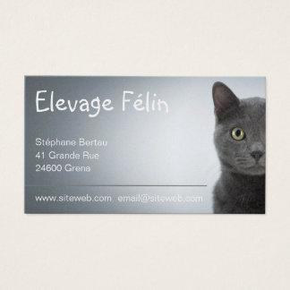 Carte de visite chat, élevage félin