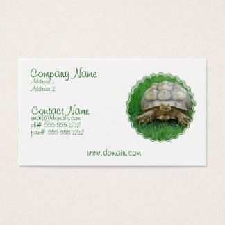 Carte de visite de tortue