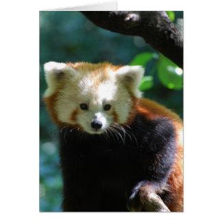 Carte de voeux adorable de panda rouge