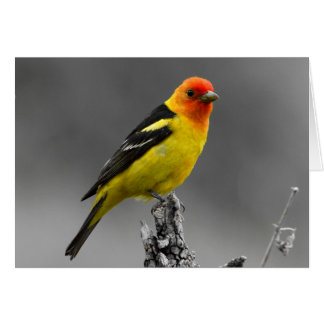 Carte de voeux américaine d'oiseau chanteur