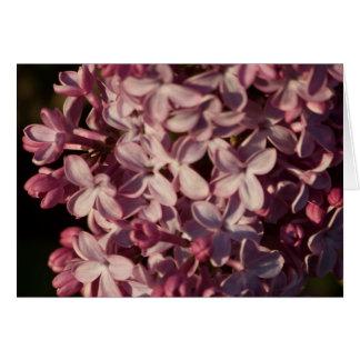 Carte de voeux assez pourpre de lilas