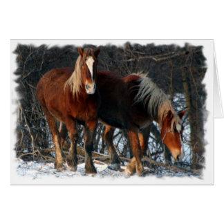 Carte de voeux belge de chevaux de trait