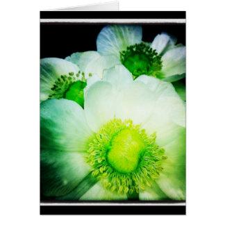 Carte de voeux blanche de blanc d'anémone