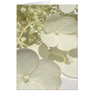 Carte de voeux blanche de fin de fleur d'hortensia