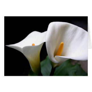 Carte de voeux blanche de fleur de zantedeschia