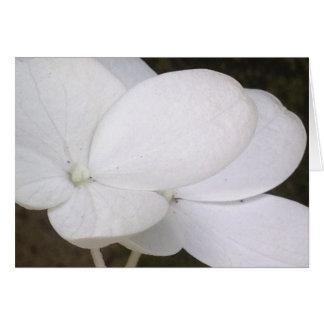 Carte de voeux blanche de fleurs d'hortensia de