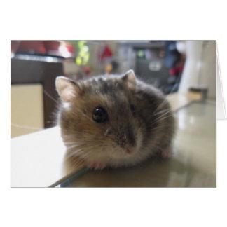 Carte de voeux blanche de hamster d'hiver