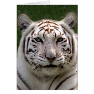 Carte de voeux blanche de tigre