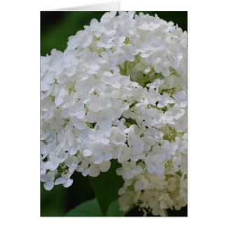 Carte de voeux blanche d'hortensias