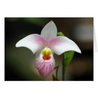 Carte de voeux blanche/rose d'orchidée