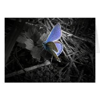 carte de voeux bleue de papillon