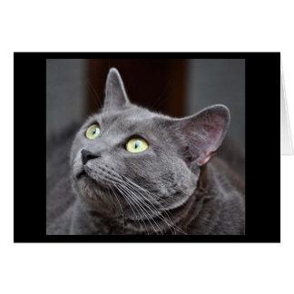 Carte de voeux bleue russe de délivrance de chat