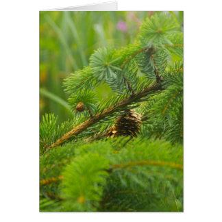 Carte de voeux cachée de cône de pin