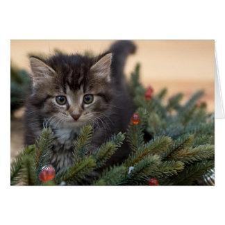 Carte de voeux chaude de Noël de chat