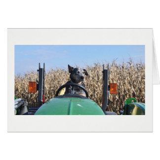 Carte de voeux - chien conduisant le tracteur