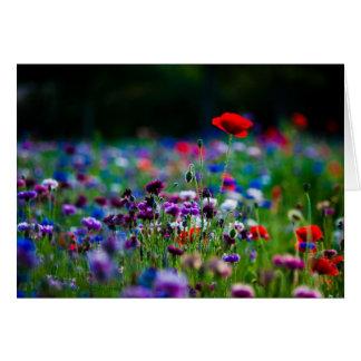 Carte de voeux colorée de photo de fleurs sauvages