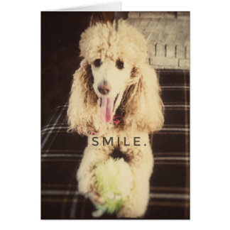 Carte de voeux de blanc de caniche de sourire