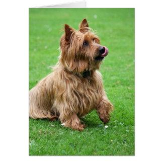 Carte de voeux de blanc de chien de Terrier