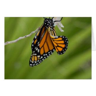 Carte de voeux de blanc de papillon de monarque