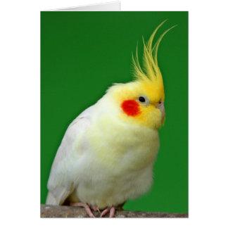 Carte de voeux de blanc de photo d'oiseau de