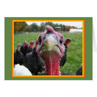 Carte de voeux de bon thanksgiving
