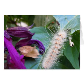 Carte de voeux de Caterpillar