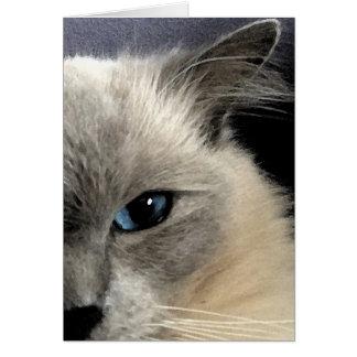 Carte de voeux de chat de Ragdoll