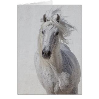 Carte de voeux de cheval - l'étalon blanc