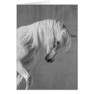 Carte de voeux de cheval - l'étalon de TheWhite