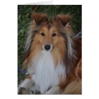 Carte de voeux de chien de berger de Sheltie