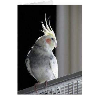 Carte de voeux de Cockatiel