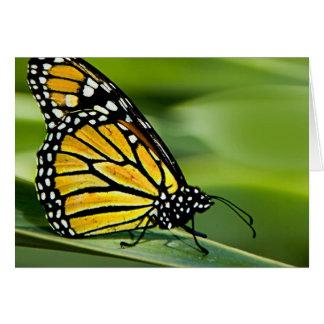 Carte de voeux de conception de papillon de