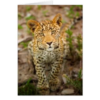 Carte de voeux de CUB de léopard