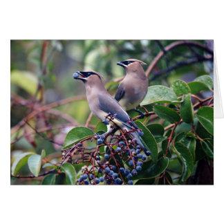 Carte de voeux de déjeuner d'oiseau (blanc à