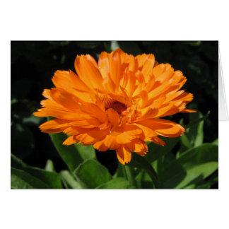 Carte de voeux de fleur de Calendula