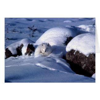 Carte de voeux de Fox arctique