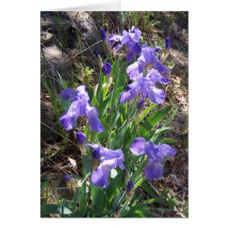 Carte de voeux de jardin de Fower d'iris