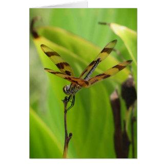 Carte de voeux de libellule de danse