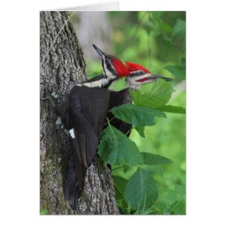Carte de voeux de M. et de Mme Pileated Woodpecker
