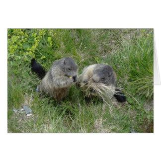 Carte de voeux de marmottes
