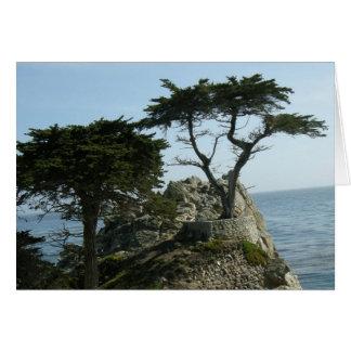 Carte de voeux de Monterey Cypress