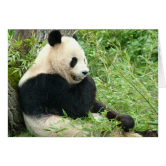 Carte de voeux de panda