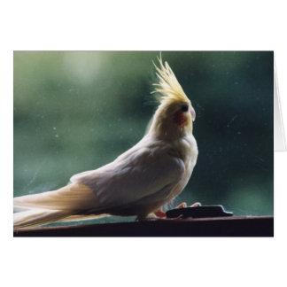 Carte de voeux de photographie d'oiseau de